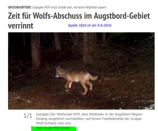 AugstBord_Wolf_M59_im Juni
