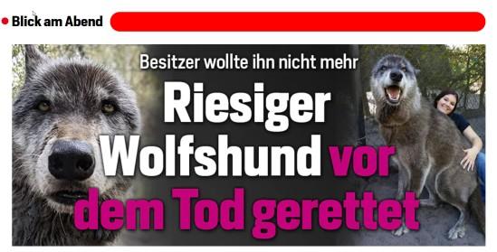 Wolfshund7